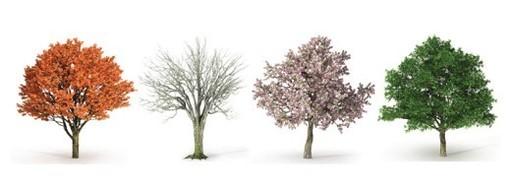 Tree in 4 seasons.jpg